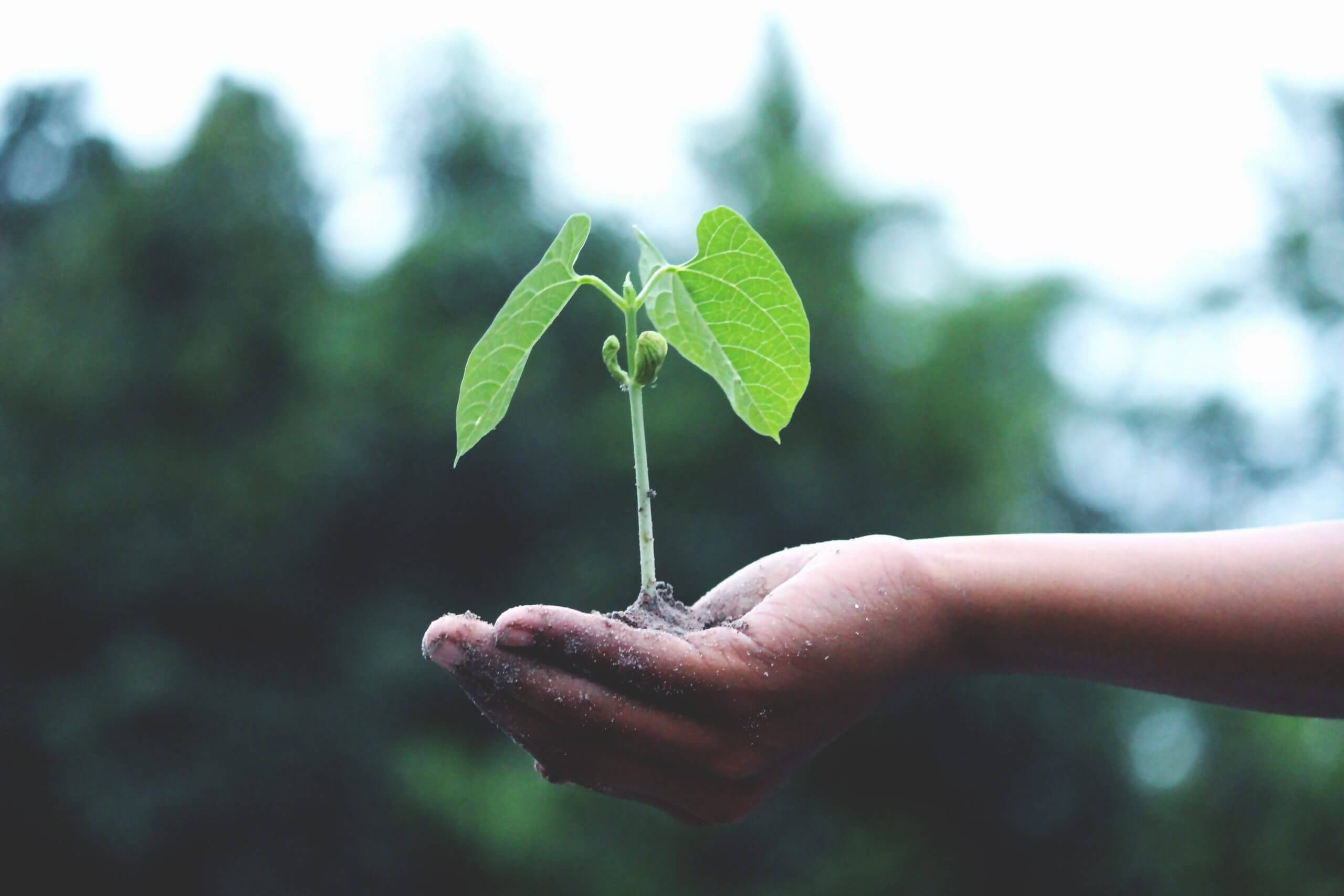 person-holding-a-green-plant